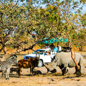 Fathala-game-drive-wildlife-sightings