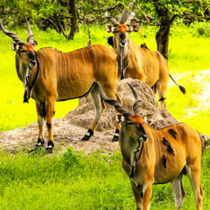 Wildlife at Fathala Senegal