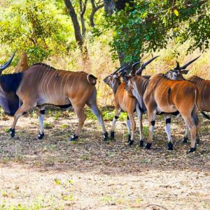 Fathala lodge wildlife