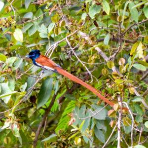 Colourful bird in tree