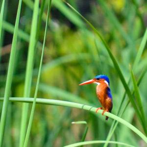 Colourful bird on grass