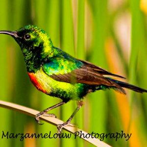 Birdlife at Fathala