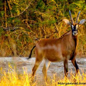 Senegal wildlife