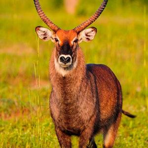 Fathala Senegal wildlife