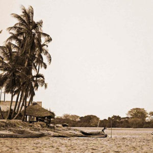 Senegal palm trees by river and boats