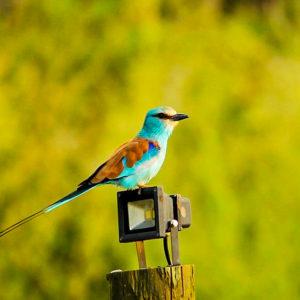 Senegal bird watching