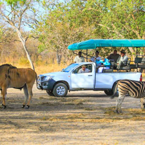 Senegal wildlife reserve safari game drive