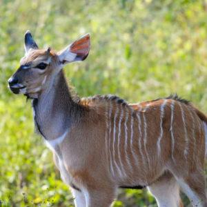 Senegal safari baby wildlife & animals