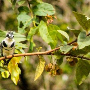 Birdwatching at Senegal safari lodge