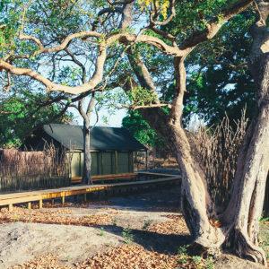 Safari tented accommodation