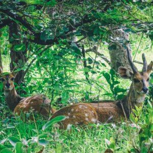 Wildlife in shade bush