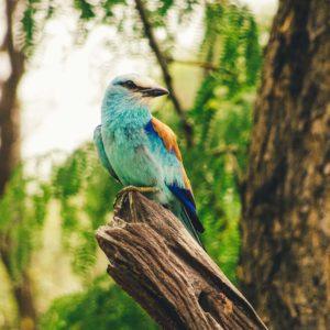 blue colourful bird
