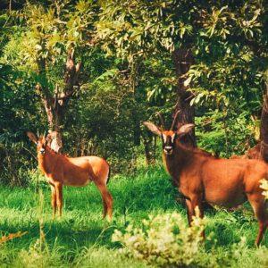 wildlife in bush