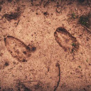 Animal track prints
