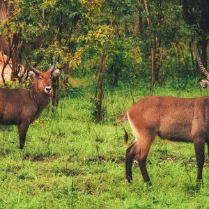 Wildlife Fathala Reserve