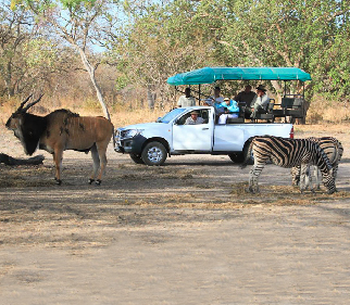 African animal sightings safari game drive
