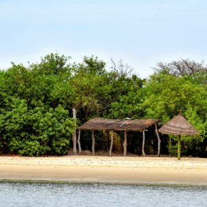 Senegal mangroves river boat cruise