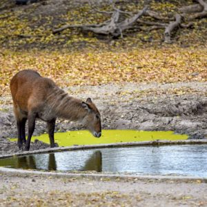 Wildlife drinking from waterhole