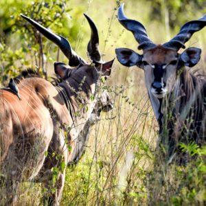 Wildlife Senegal game reserve
