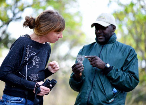 Walking safari tracker guide
