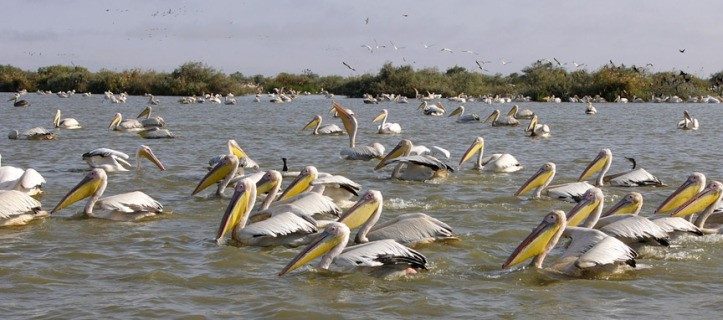 Senegal Djoudj National Bird Sanctuary