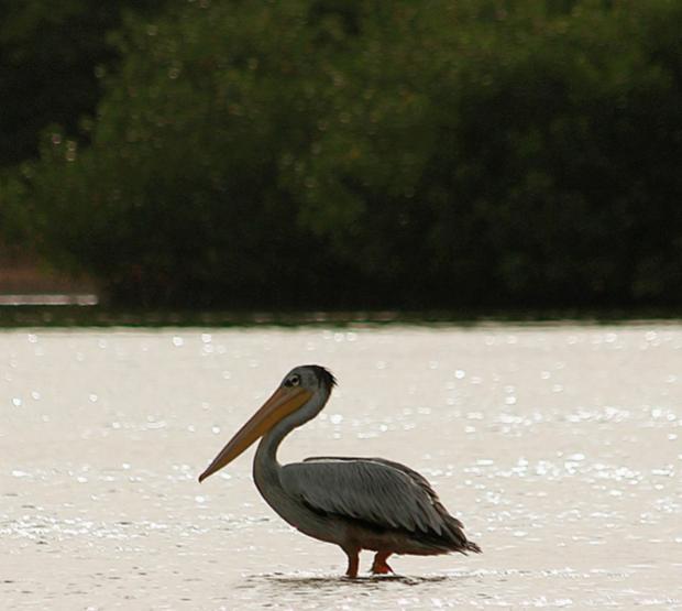 Bird Life at Fathala