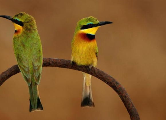 Common Birdlife of Fathala