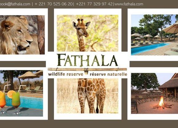 COVID-19 and its impact on Fathala