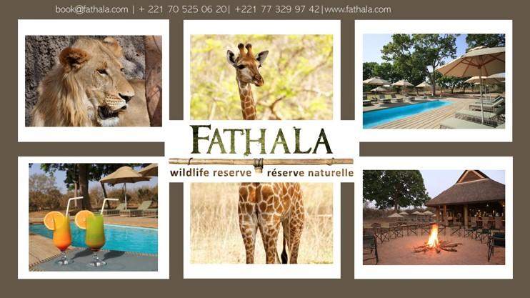 Fathala Covid Blog