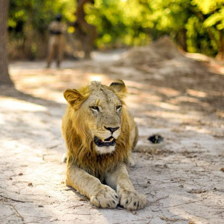 fathala-wild-life-reserve-senegal-79