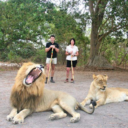fathala-lions